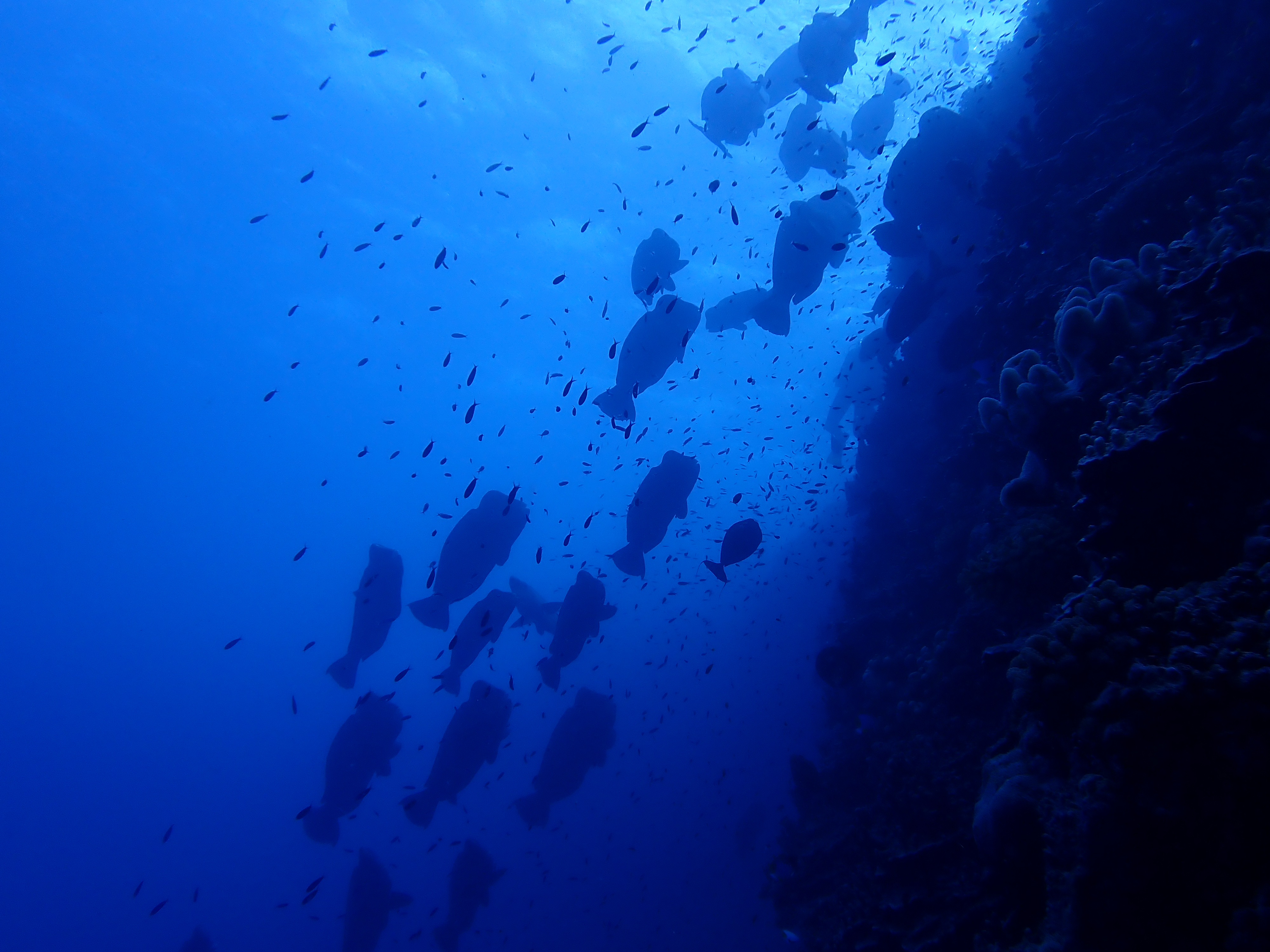 Bougainville wall dive
